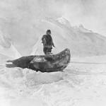 Amundsen 12